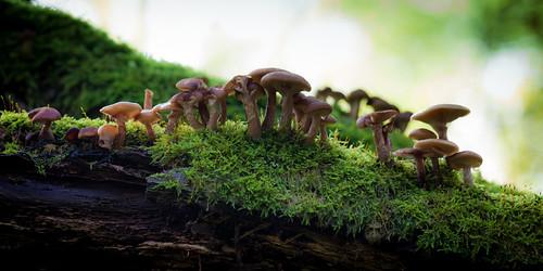 Familie paddenstoel by eosfoto