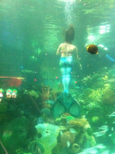 live mermaid.