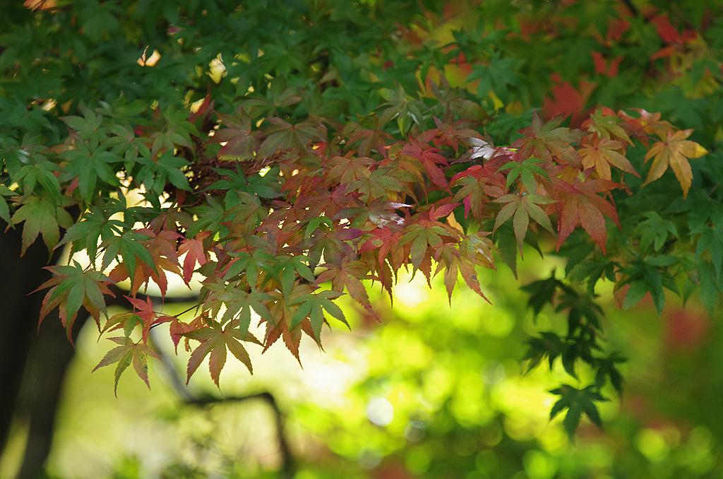 秋天,適合出遊的日子