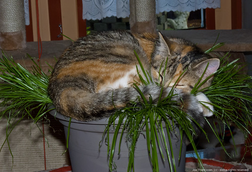 Sleeping between the Cat Grass