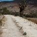 Road - camino entre Las Palmas y La Paz, Región Mixteca, Oaxaca, Mexico por Lon&Queta