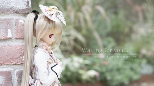 WP_SAKUNO_001