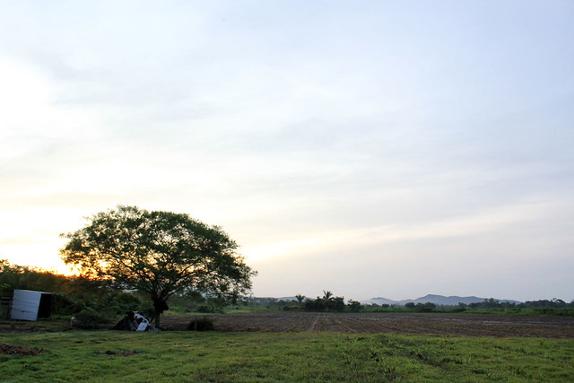 mexico-field