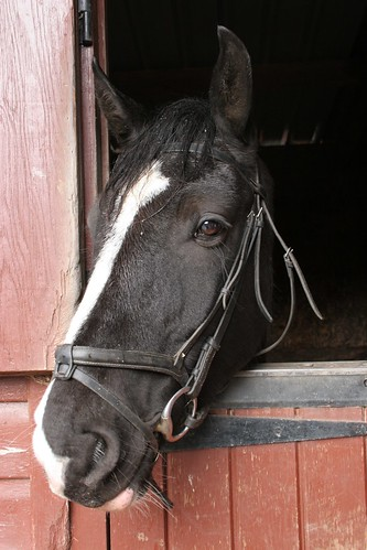 'Rebel' - Barend Riding Stables
