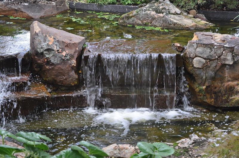 Dallas Arboretum 10-13-12 (179)