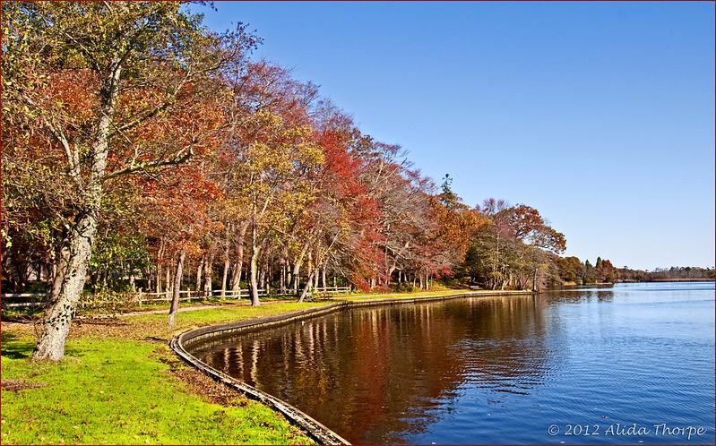 Arboretum river
