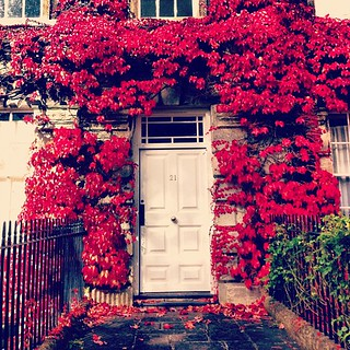 Pretty pretty leaves - I want to live here! #bath