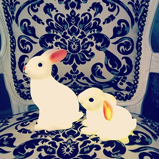 Today's rabbit purchases :) #bunny