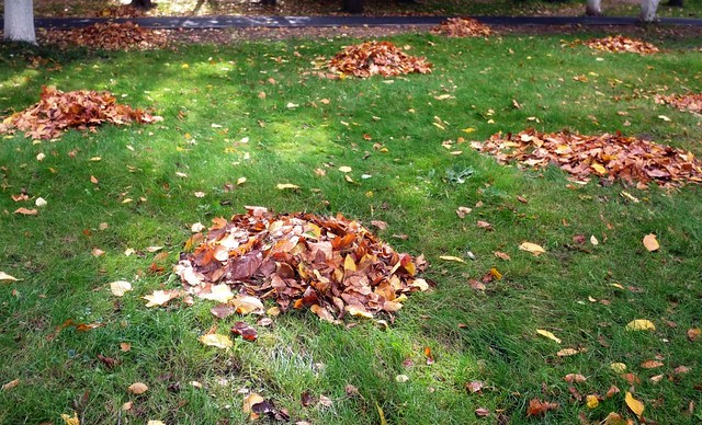 листья кучи