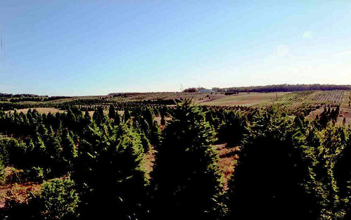 German Growers Visit - The Mature Trees