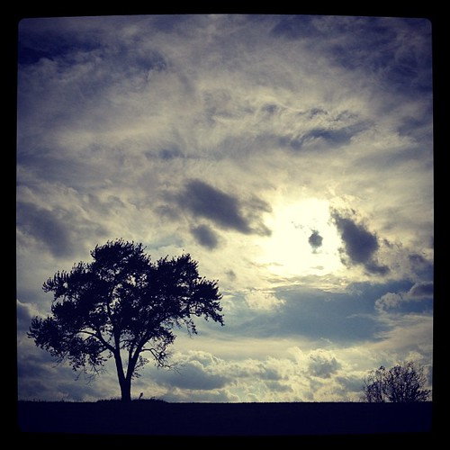 My kind of love. :-). #tree #sun #clouds