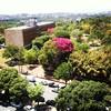 Todo dia eu fico admirando as florzinhas roxas dessa árvore. Tá linda! #Ufmg