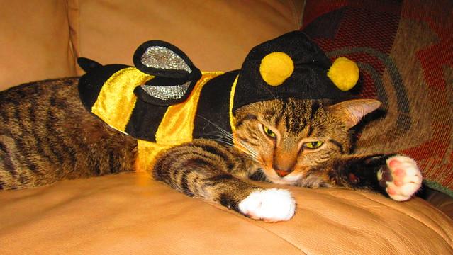 Pet Cat Clothing
