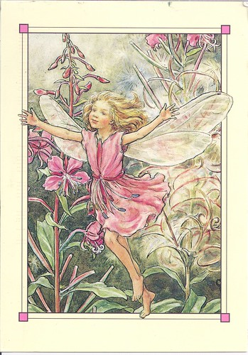 The Rose Bay Willow Herb Fairy-Joy Cicely Mary Barker