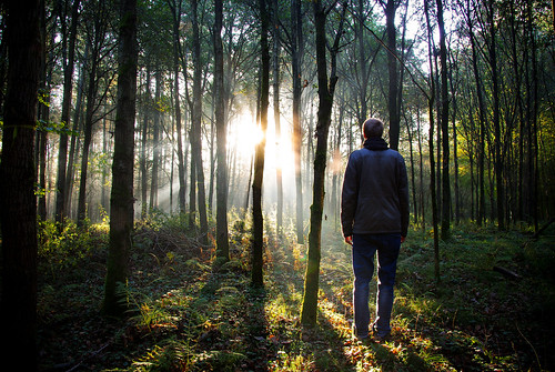light brussels selfportrait backlight forest autoportrait belgique lumière bruxelles contrejour sonian zoniënwoud forêtdesoignes