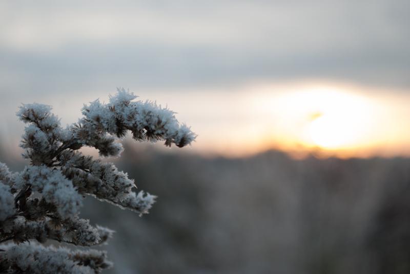 Зима пришла DSC_2069