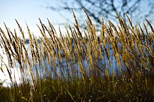 sunshine nikon october sweden straw 85mm explore d800 vaxholm