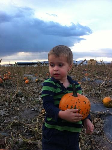 Harward Farm's Pumpkin Patch