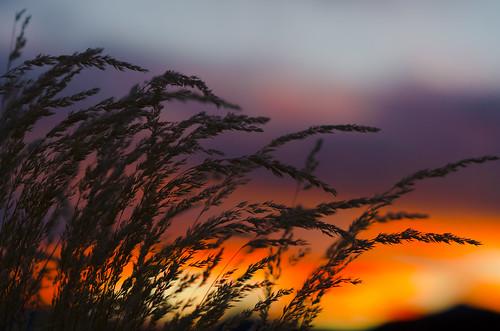 autumn sunset sky colors grass colorado warm wheat harvest grasses