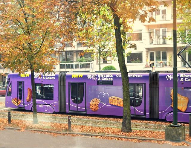 otoño violeta