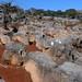 Field of Limestone formations - Campo lleno de esculturas de piedra caliza; entre La Paz y Guadalupe Hidalgo, Región Mixteca, Oaxaca, Mexico por Lon&Queta
