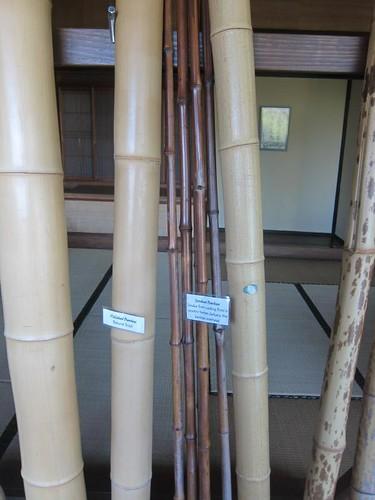 Hakone Japanese Gardens, Saratoga, CA, bamboo IMG_2387