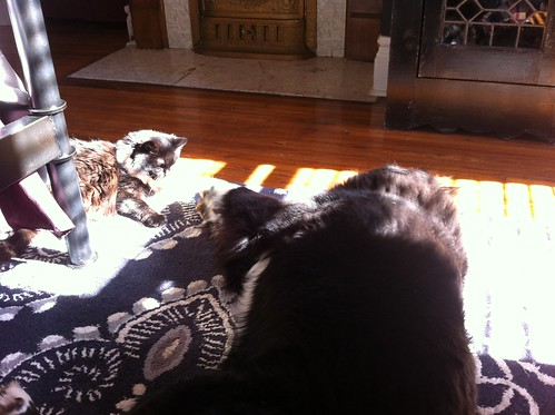 See? The sunbeam IS big enough for the both of us.