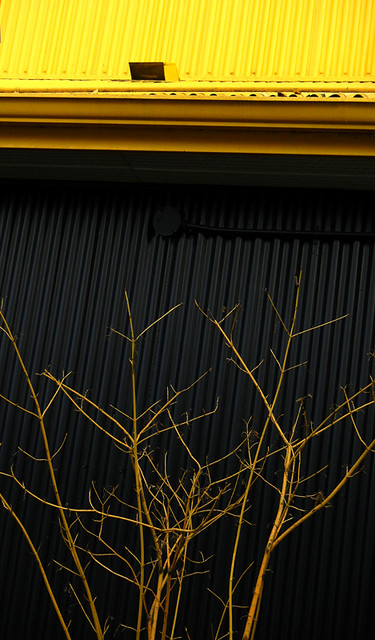 Yellow Branches Against a Black Wall