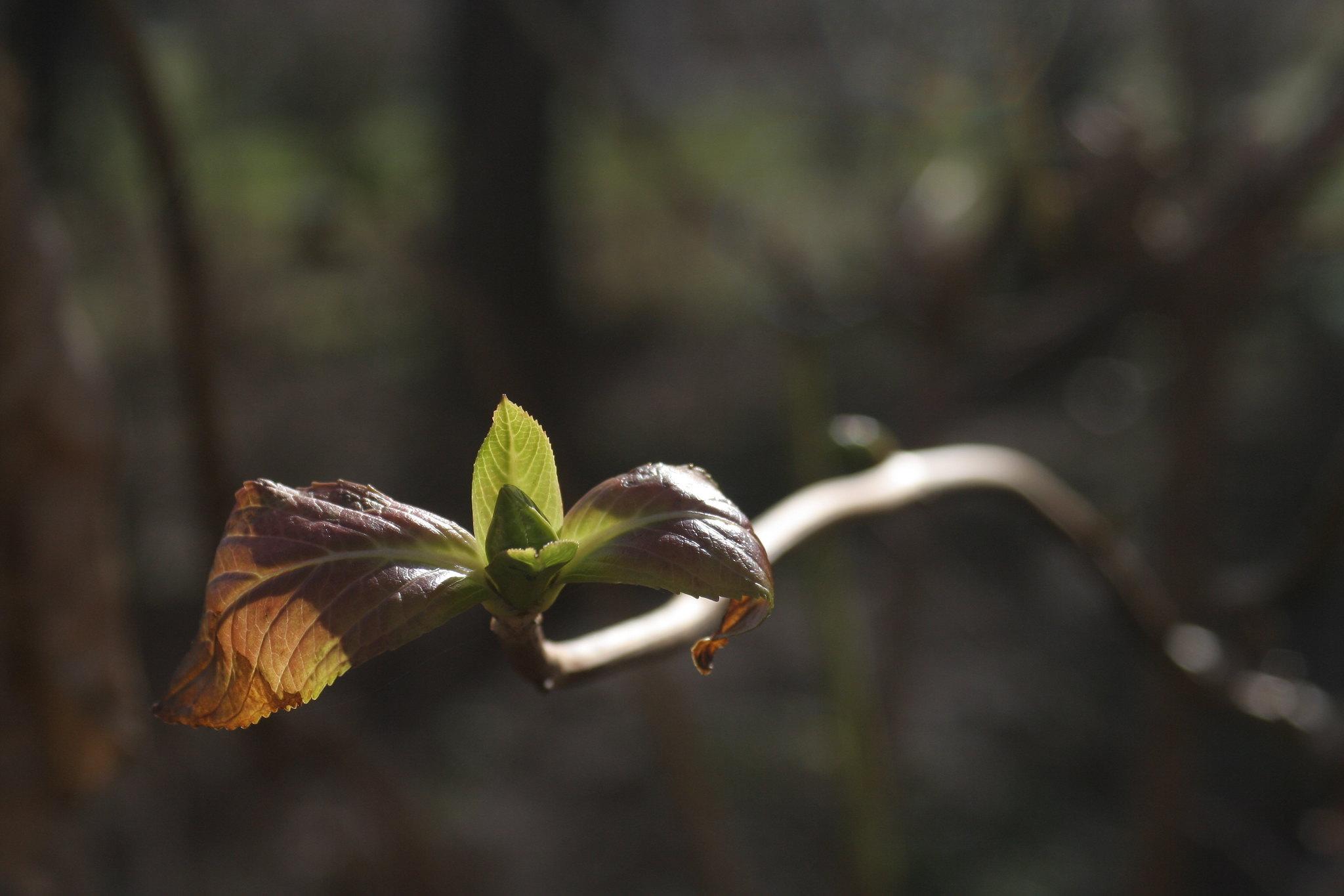 Spring comes to Ihlamur Kasrı