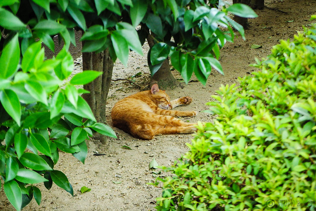 Today's Cat@2016-08-13