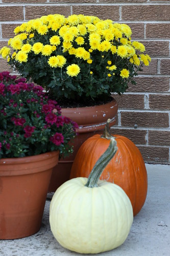 Mums and pumpkins 008