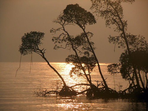 sea india beach silhouette sunrise landscape island golden flickr favourite havelock lifeisbeautiful myfavourite theworldthroughmyeyes anawesomeshot beachno1 betterthangood spiritofphotography nikoncoolpixs8000 dushyantthakurphotography