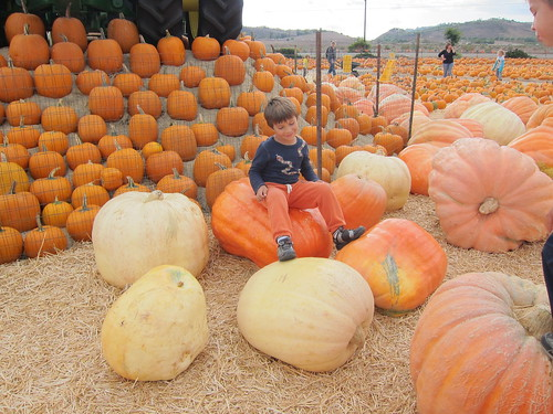 Finn on the big pumpkin