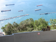 Gibraltar, Spain, October 2012 (5)
