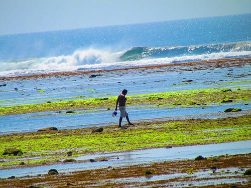 Pantai Plengkung - Pencari Kerang