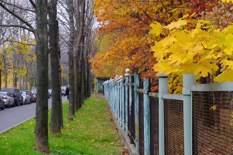 Golden Autumn, MSU