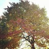 Autumnal Tree At The Savill Gardens
