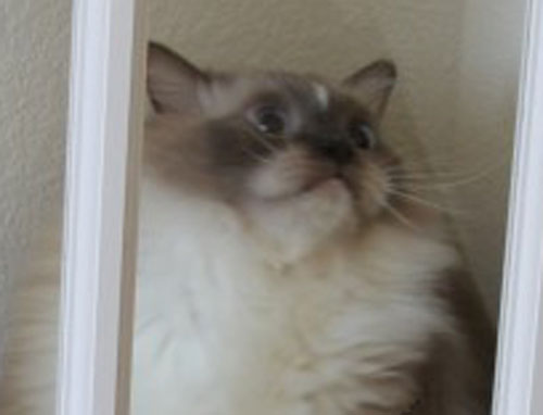 Tyco Close Up