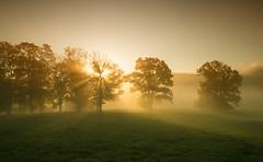 [フリー画像素材] 自然風景, 樹木, 霧・霞, 薄明光線 ID:201210300600