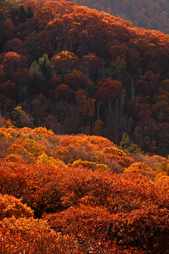 Shenandoah: Autumn bloom