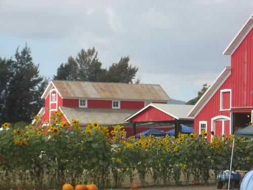 faulker farms