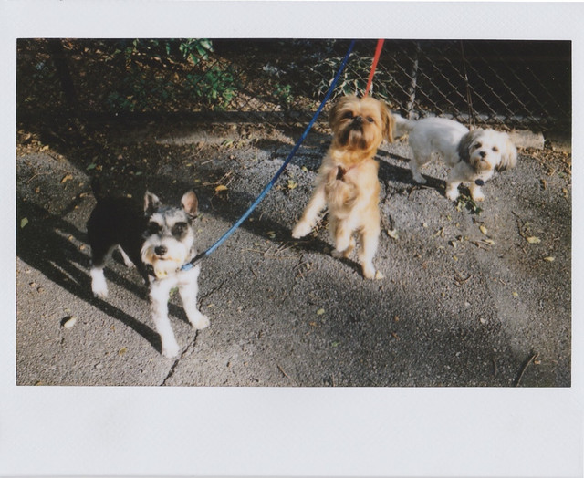 Three Dogs, Instax Wide