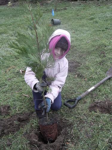 Rob Adams Park Planting 2011