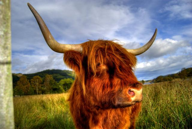 What moo looking at by Graham Knox, Dalgety Bay, Scotland, UK
