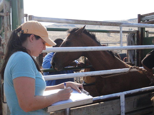 APHIS Veterinarian Brianna Schur works at the Warm Springs facility.