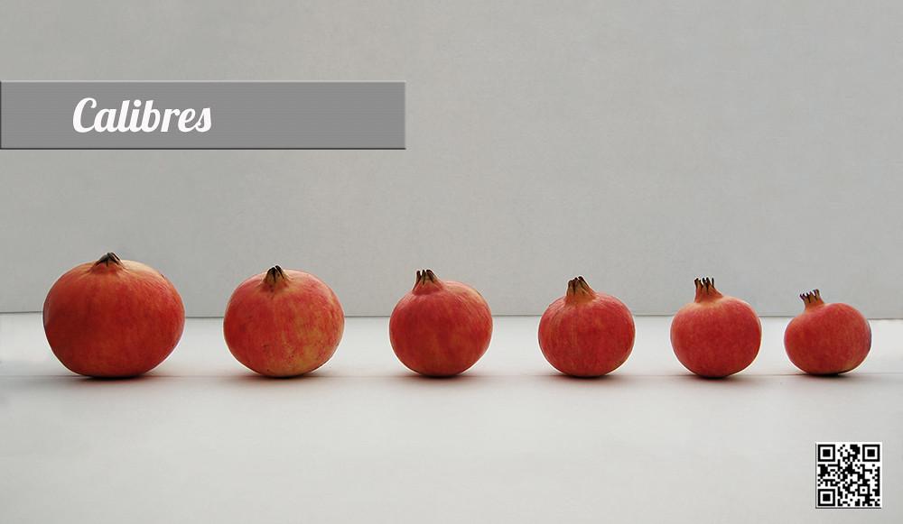 Резултат с изображение за mollar de elche pomegranate
