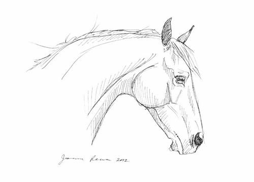 Friesian Head Drawing Horse Drawing Quot Head Study Quot