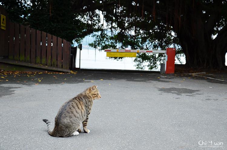 [Cat]台北淡水貓散步。自在貓的踢踏小天地(警局專用停車場)