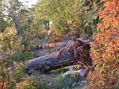 due tronchi caduti