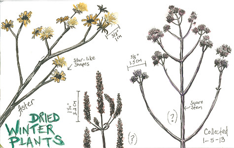 20130106_dried_wildflowers
